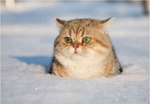 Photo from http://theverybesttop10.com/cats-in-the-snow/