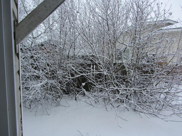 snowfall December 2016 3
