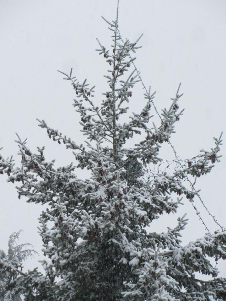 snowfall December 2016 1