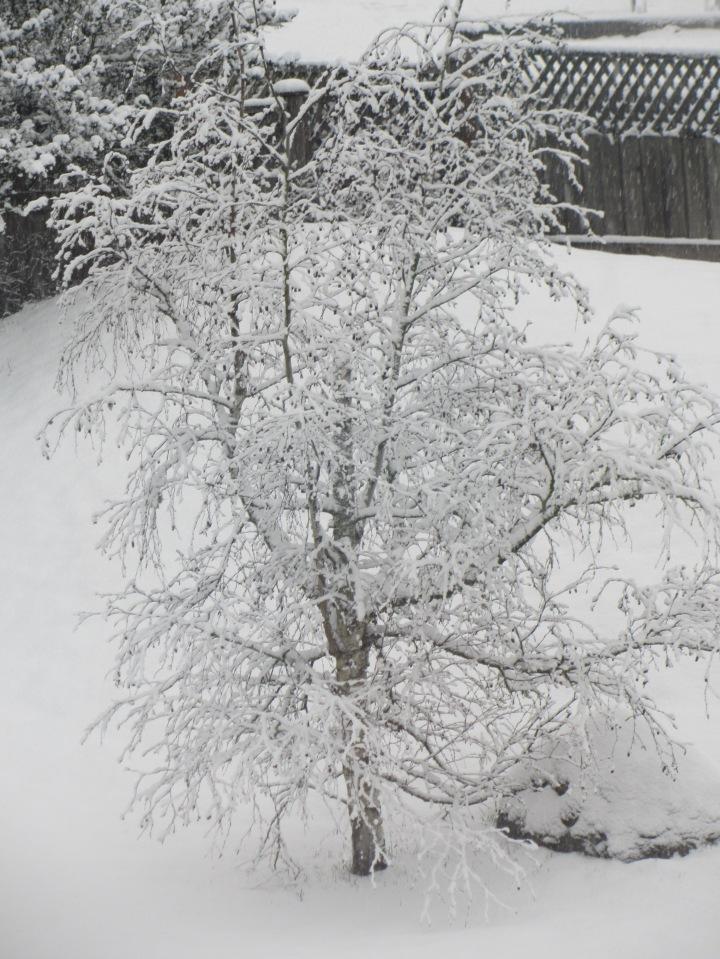 snowfall December 2016 2